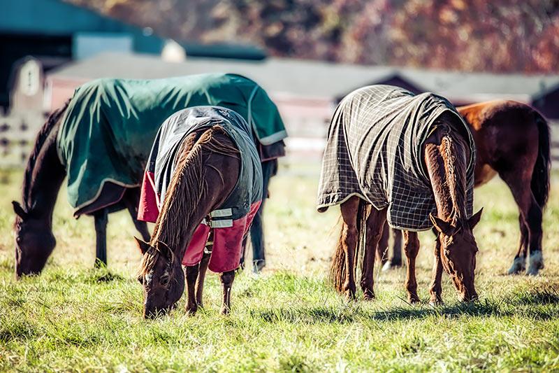 Pferde mit Pferdedecken
